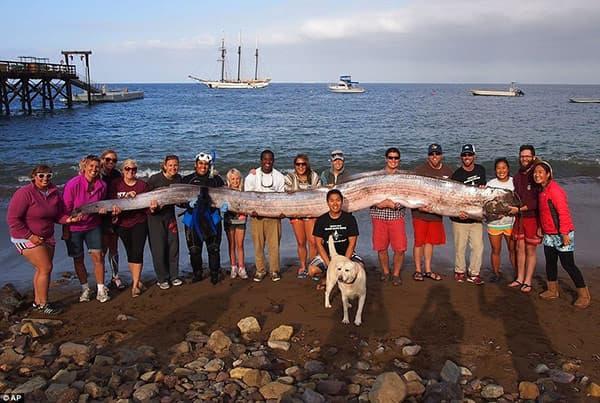 На побережье Калифорнии найдено морское чудовище длиной 5,5 метров