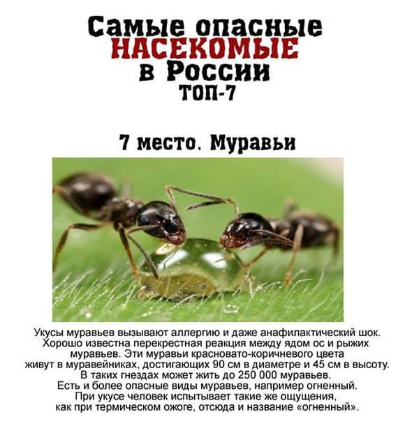 7 самых опасных насекомых, обитающих в России