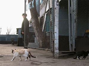 В Ухтинской колонии  поймали кошку с сотовыми телефонами
