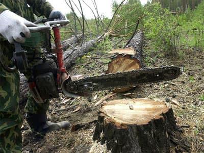 Три жителя Башкирии незаконно вырубили лес на 12 млн. рублей