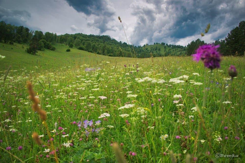 В Башкирии займутся производством лекарственных средств из натурального сырья
