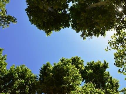 Уфимские леса разобьют на 5 зон и займутся их благоустройством