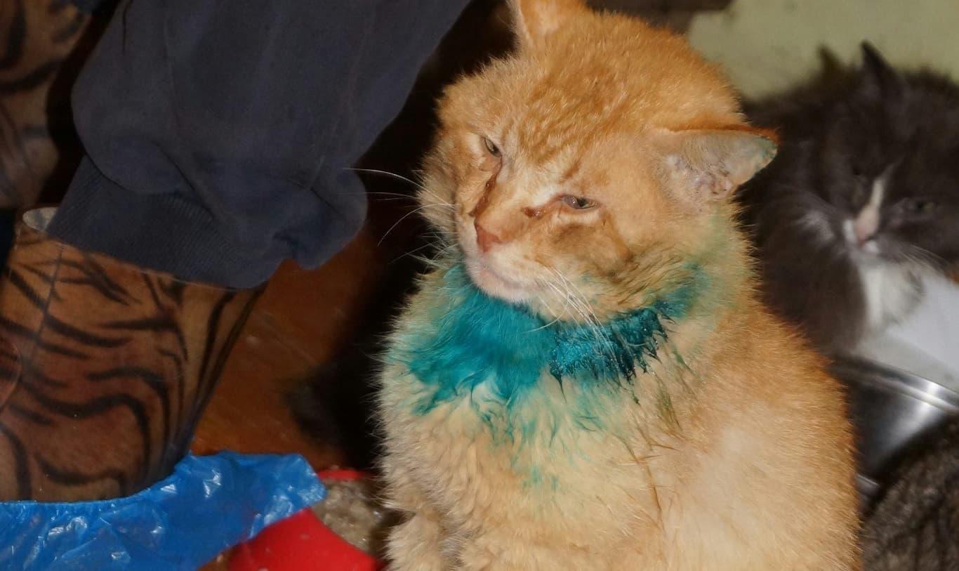 Жители Башкирии обнаружили в частном доме концлагерь для кошек