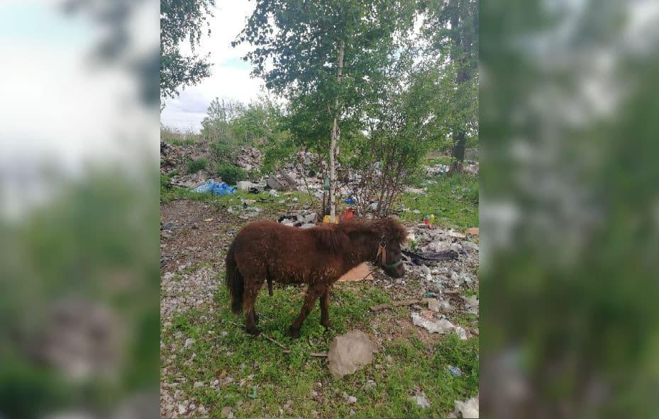 В Стерлитамаке на свалку выкинули живого пони