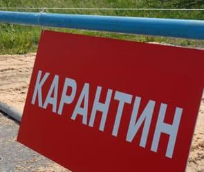 В Мелеузовском районе Башкирии ввели карантин по бешенству