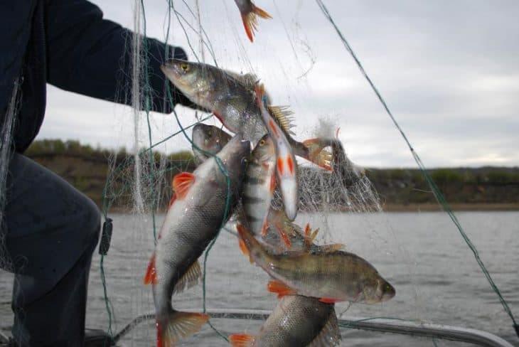 В Архангельском районе браконьер ловил рыбу в период нереста