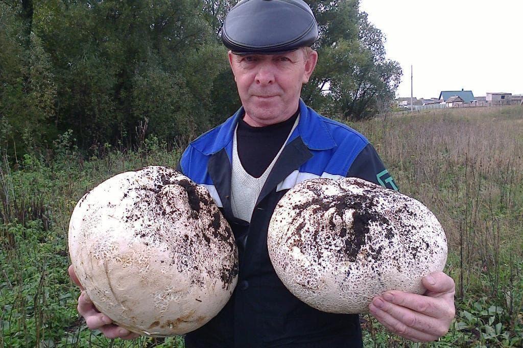 Башкирия попала в список грибных регионов России