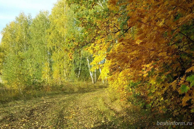 В Краснокамском районе нашли тело пропавшего грибника