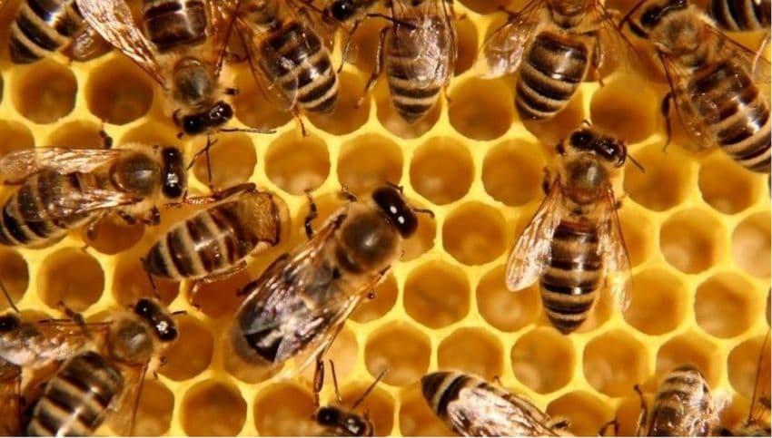 В Башкирии примут программу по развитию промышленного пчеловодства