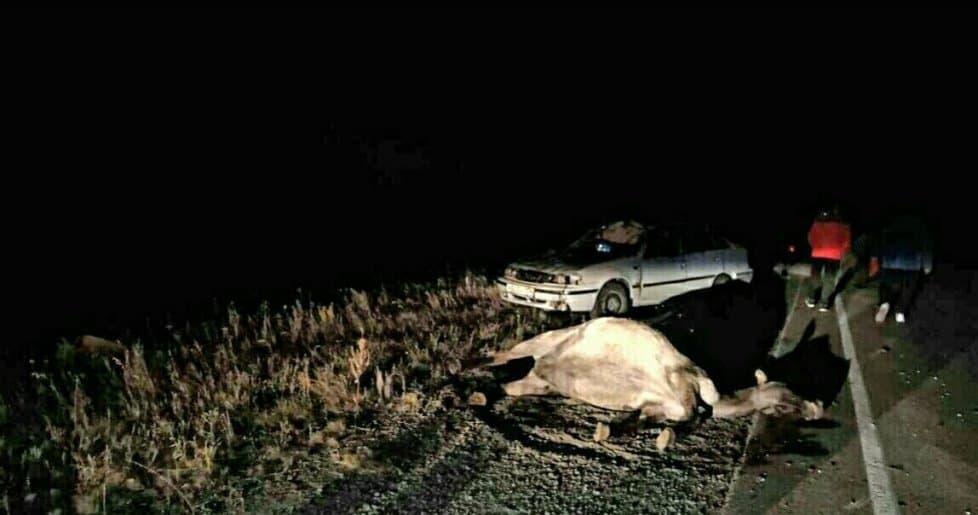 В Абзелиловском районе водитель насмерть сбил двух лошадей