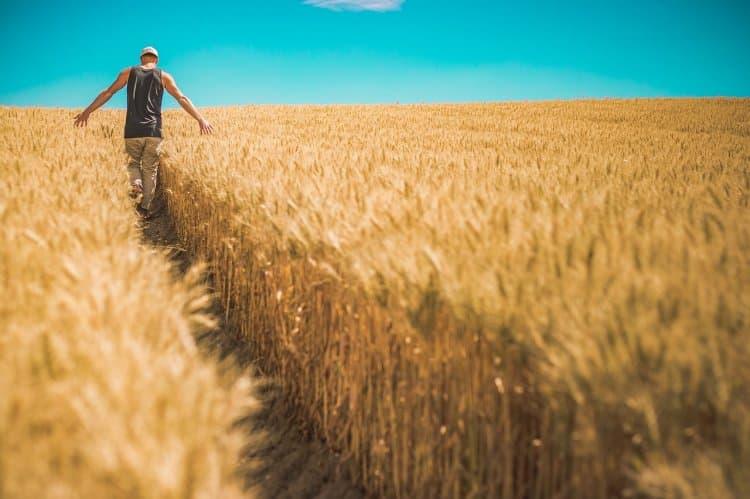 Фермерам позволят строить жильё на сельхозугодьях