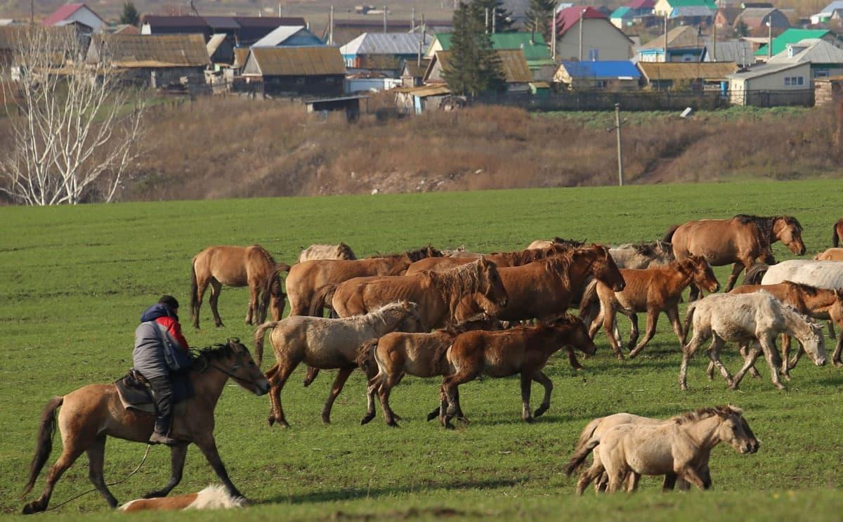 В Зианчуринском районе украли табун из 49 лошадей
