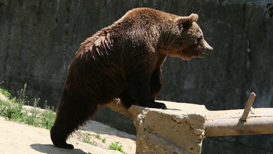 Жителей Уфы напугал медвежонок прогуливавшийся в одном из дворов города